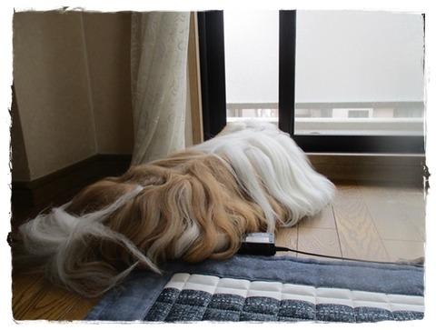 IMG_5031ユニ