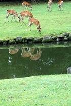 100623奈良公園4