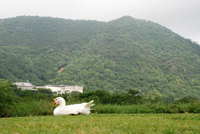 090611桃太郎公園1