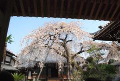 犬山 円明寺