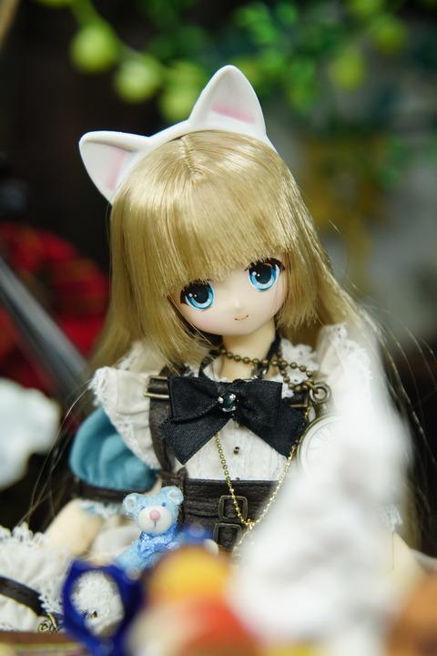 orange_pekoe_1_2021_9_1_DSC03131