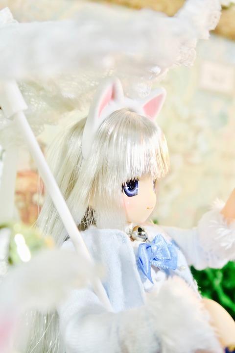 orange_pekoe_1_2017_3_20_IMG_6675