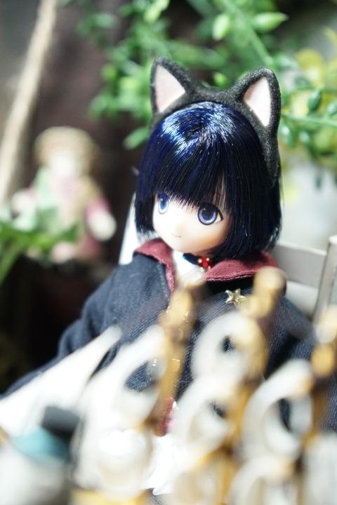 orange_pekoe_1_2019_1_16_DSC00475