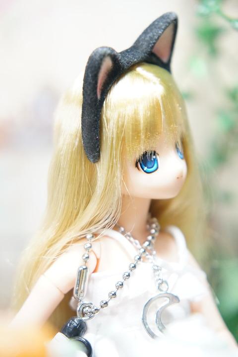 orange_pekoe_1_2018_5_16_DSC03418