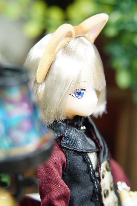 orange_pekoe_6_2019_9_8_DSC07691
