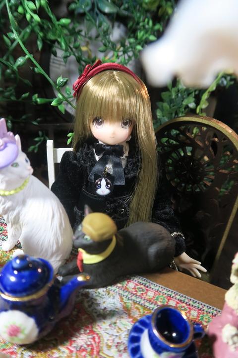 orange_pekoe_1_2017_3_23_IMG_4548