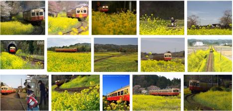小湊鉄道と菜の花
