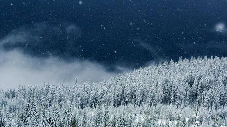 130111スコーミッシュの森@カナダ