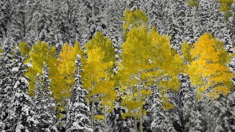 141125サンファン山脈の黄葉@アメリカ コロラド州