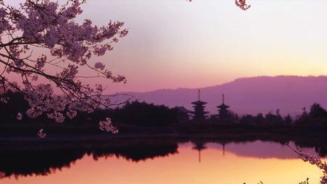140414西の京大池と薬師寺@奈良