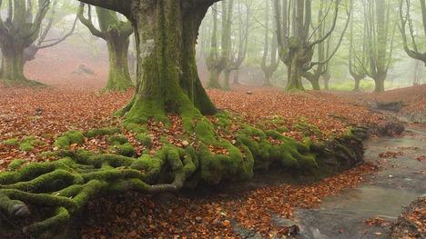 130929ゴルベア自然公園@スペイン バスク自治州