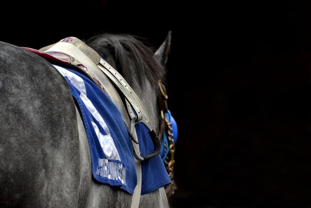 horse-1394093_1920