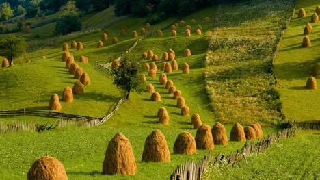 140916グラ・フモールルイの牧草地@ルーマニア ブコビナ