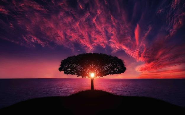 tree-736885