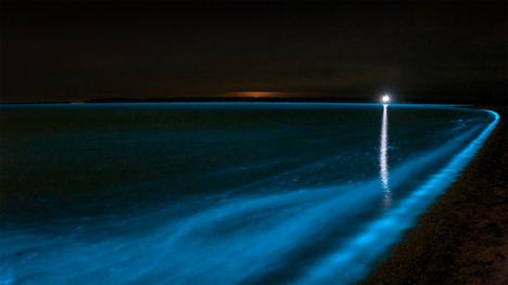 131018ギプスランド湖の夜光虫@オーストラリア ヴィクトリア