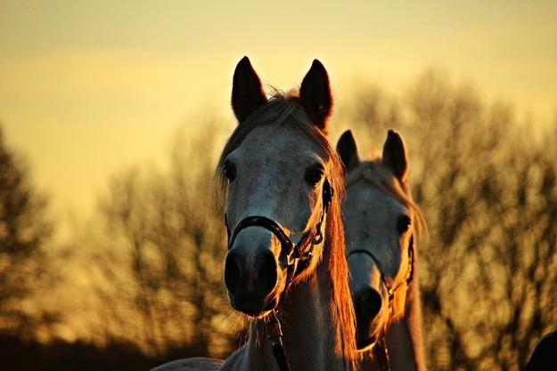 horse-1942706_1920