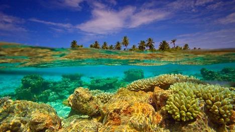 140527サンゴ礁@モルディブ
