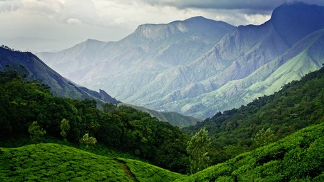 140504ムナーの茶畑@インド ケーララ州