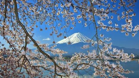 140327桜と富士山@富士五湖地方