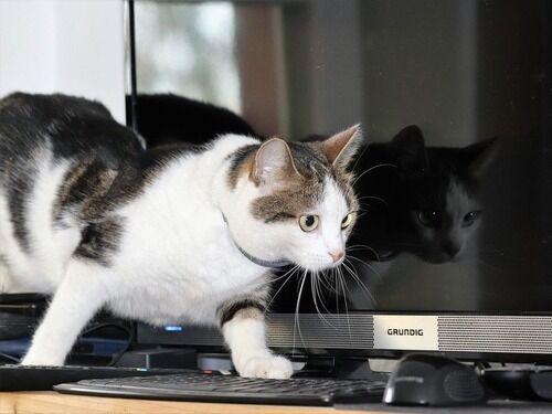 「猫と自作PCは相性が悪いかも…」と思うのはこんなとき
