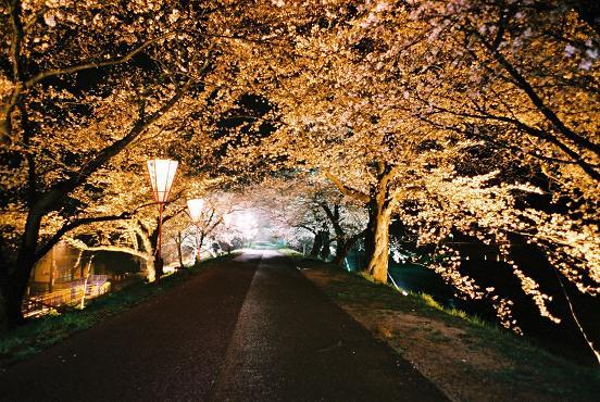 cherry-road