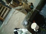 水飲み場D0238_061103