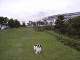 kusachiR0286_061004