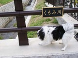 くるみ橋D09223_080412