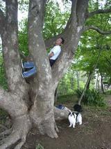木登りムシR0015201_070414