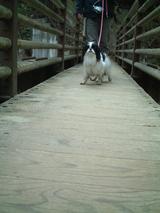 橋上D0283_061103