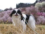 桜を背負ってアハッ♪D09299_080412