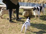 犬の犬引き♪D06561_080308