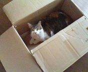 boxpochi1