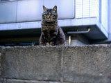 parkingcat2