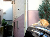 parkingcat070620