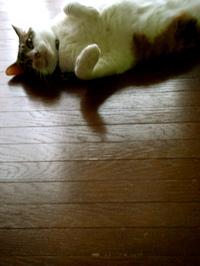 summercat3