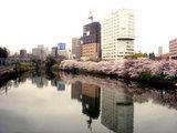 ichigayasakura