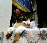 boxcat3