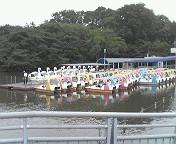 inokashira2