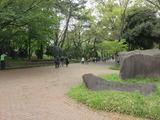 平塚市総合公園1