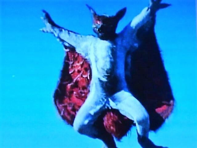 モモンガー獣人⑤