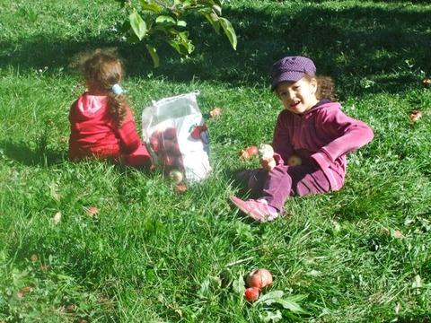 りんご狩り4
