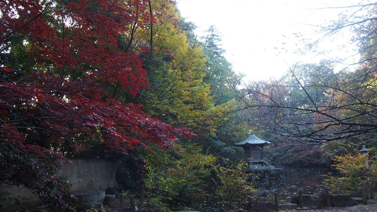 こんばんはぁぁぁ( ´∀`)つ今日は秋を探しに旅に出ました・・・(\u003d゚ω゚)人(゚ω゚\u003d)ぃょぅ!まずは・・徒歩1分の鹿がいる公園・・・ちょっと朝だったから、日がきれいに