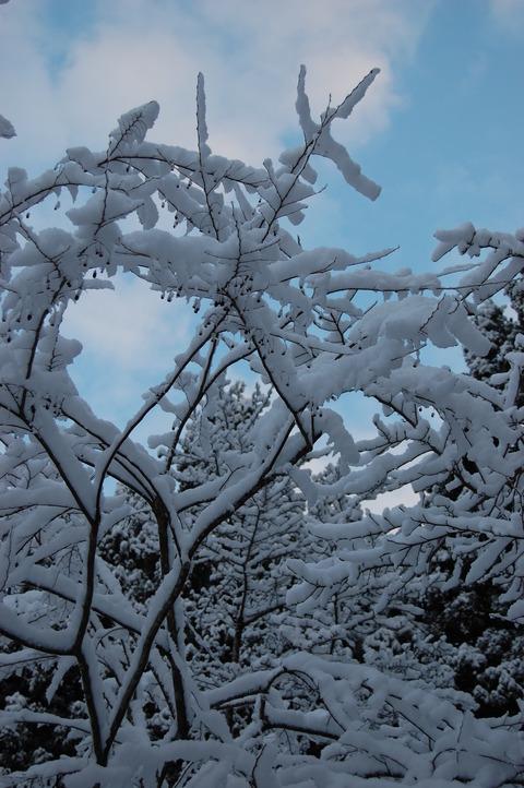 雪 001