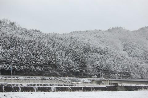 春の雪 004