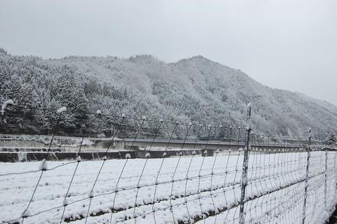 春の雪 005