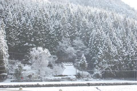 年始の雪 018