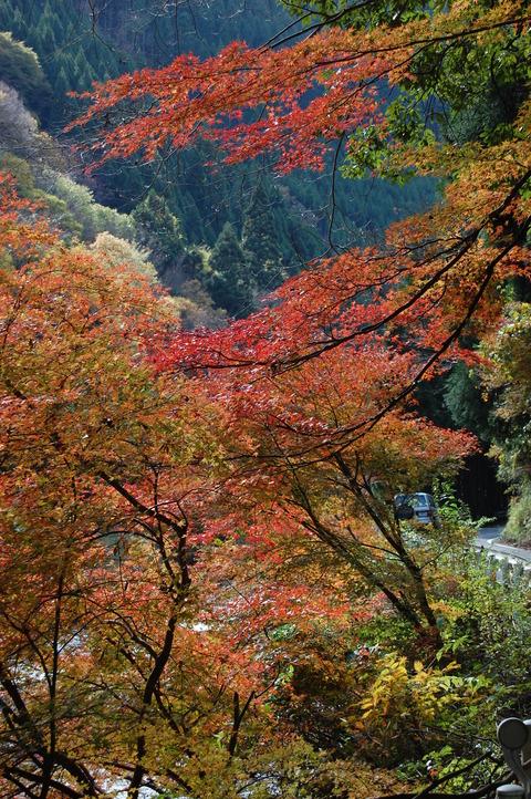 細野川 紅葉 002