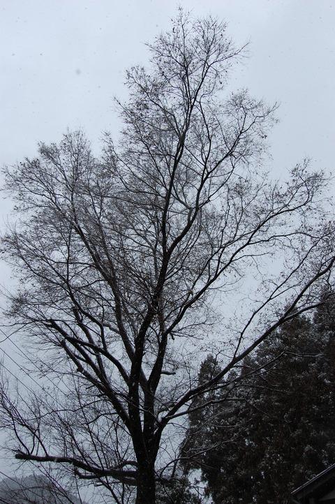 冬景 006