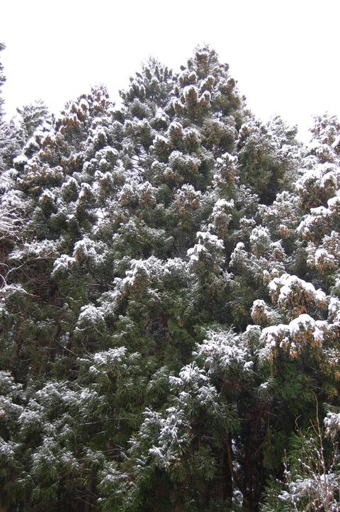 春の雪 007